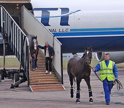 Horses Unloading from aircraft