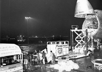 Horses being loaded at Stansted for a flight to Australia