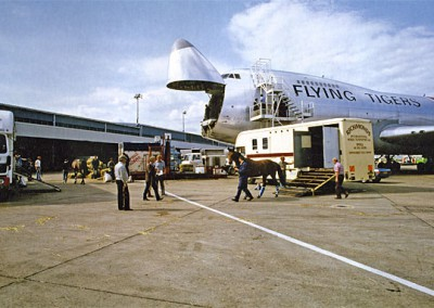 Horses ready for loading onto Flying Tigers
