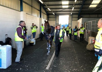 Breeders Cup runners at Stansted Border Inspection Post