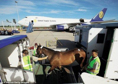 Loading horse into Airstable