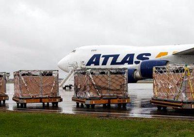 Loading cattle onto Atlas 747 charter